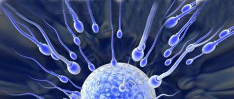 Espermatozóides e o óvulo