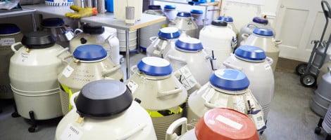 Banco de nitrógenio líquido