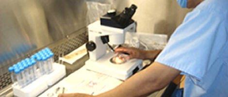Prever o Sucesso da Fertilização in Vitro